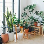 3 Common Houseplant Diseases